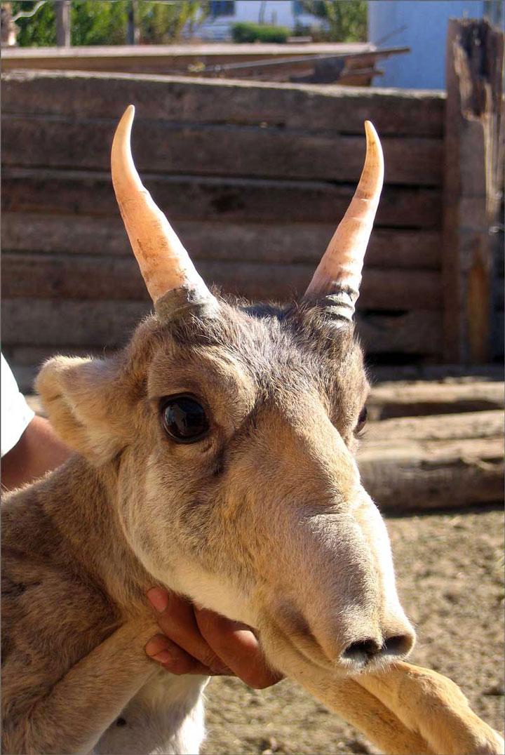 21-animaux-inhabituels-dont-vous-nauriez-jamais-soupconne-lexistence19