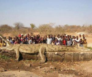 le-plus-grand-crocodile-du-monde-300x250