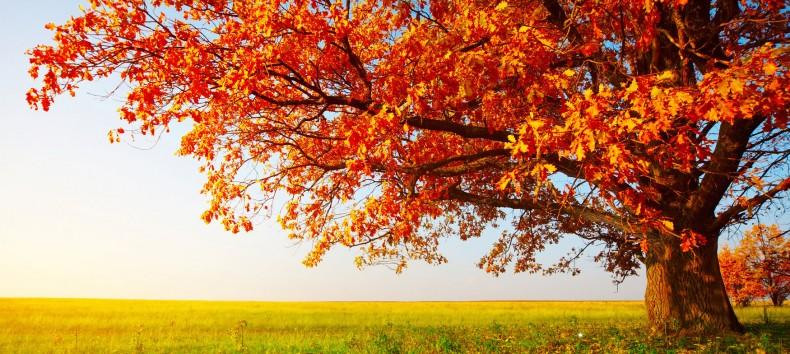 rsz_arbre-automne-790x354