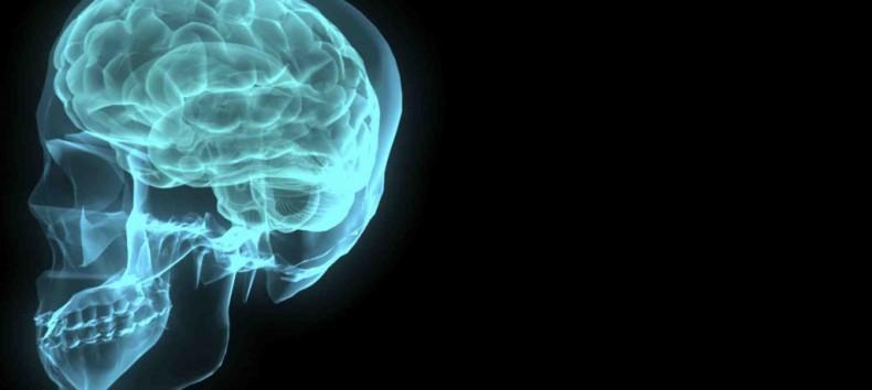 cerveau-790x354