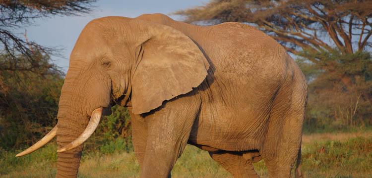 En 40 ans, 50% des animaux sauvages ont disparu de la surface de la Terre disparition animaux sauvages terre